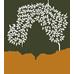 Olijf Huidtherapie Logo
